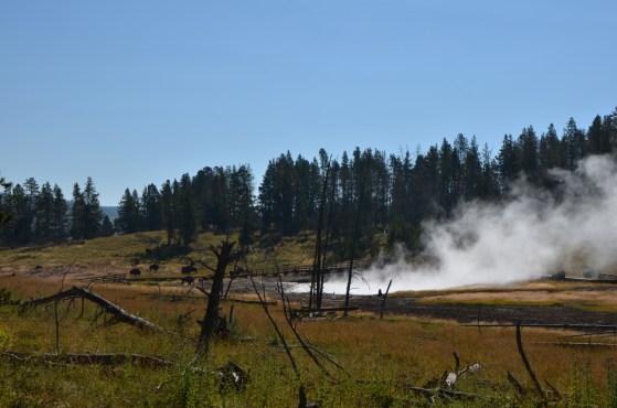Sizzling Basin, hope the bison don't end up sizzling.