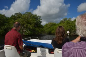 We reach the stream and turn in under the mangrove tunnel