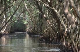 Everglades_052