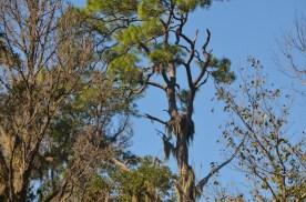Osprey nest along the boat route.