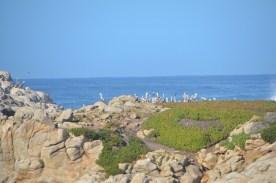 Monterey_026