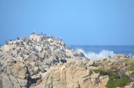 Monterey_028