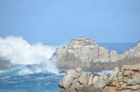 Monterey_029