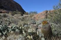 Saguaro_020