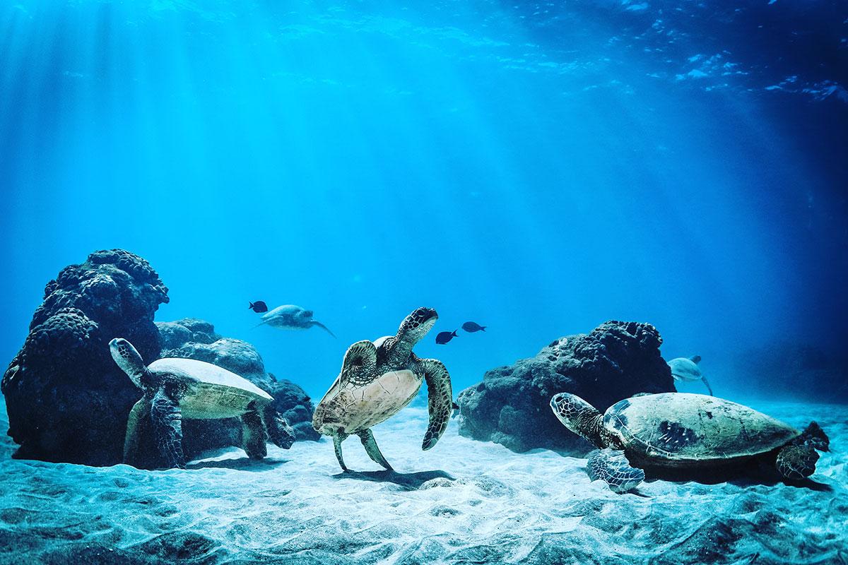 corals turtles