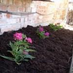 Easy summer garden flower bed