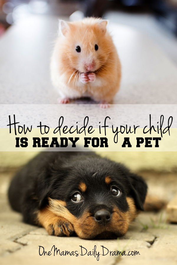 How to decide if your child is ready for a pet | One Mama's Daily Drama --- Important things to consider before adding a pet to your family.