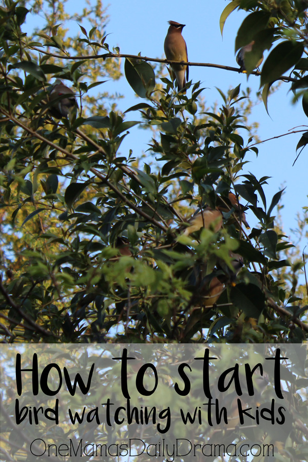How to start bird watching with kids