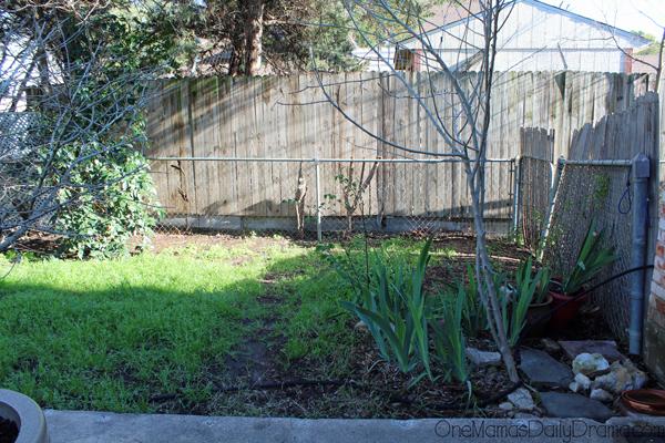 herb-garden1