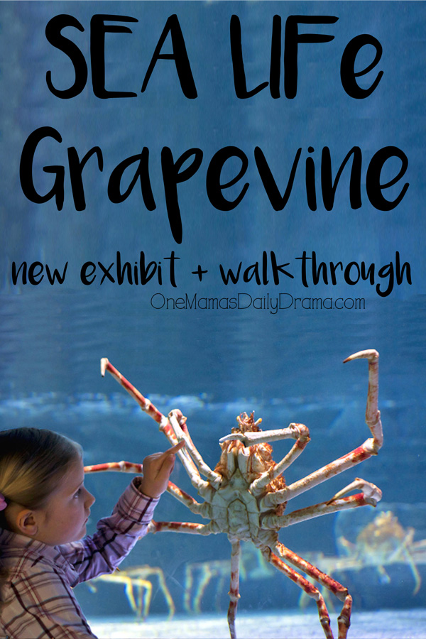 SEA LIFE Grapevine new exhibit + walk-through of the aquarium