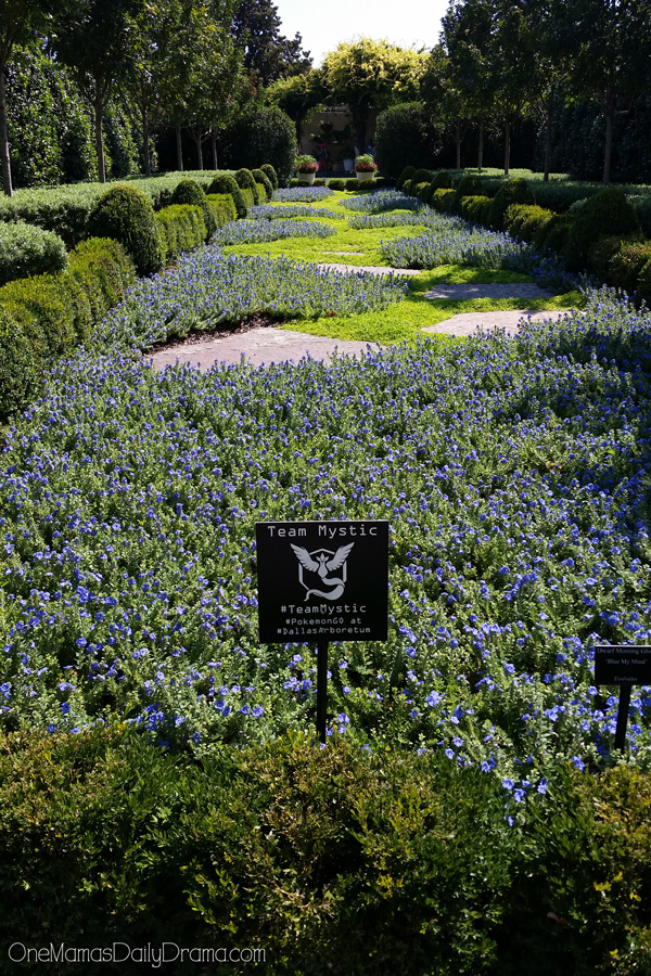 Pokemon Go at the Dallas Areboretum | 3 gyms, 30+ pokestops #TeamMystic garden
