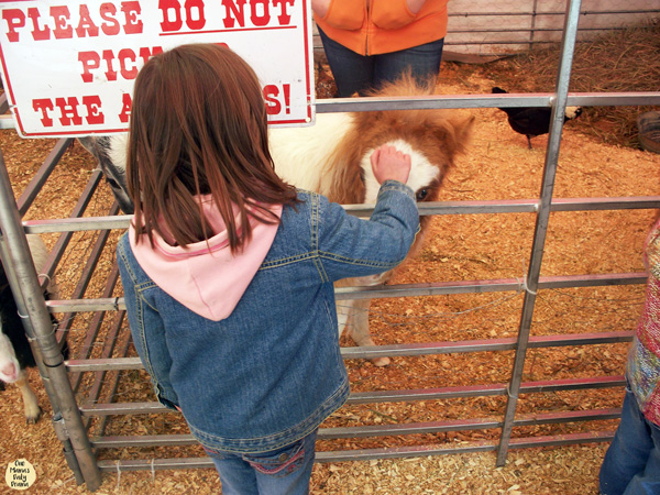 9 things to do with kids at the Fort Worth Stock Show | Petting a miniature pony