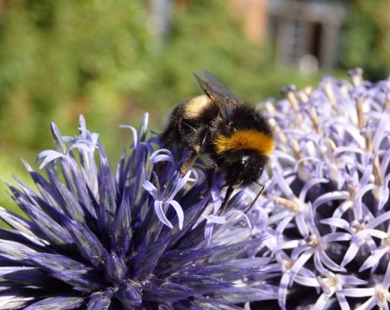 friendly bee