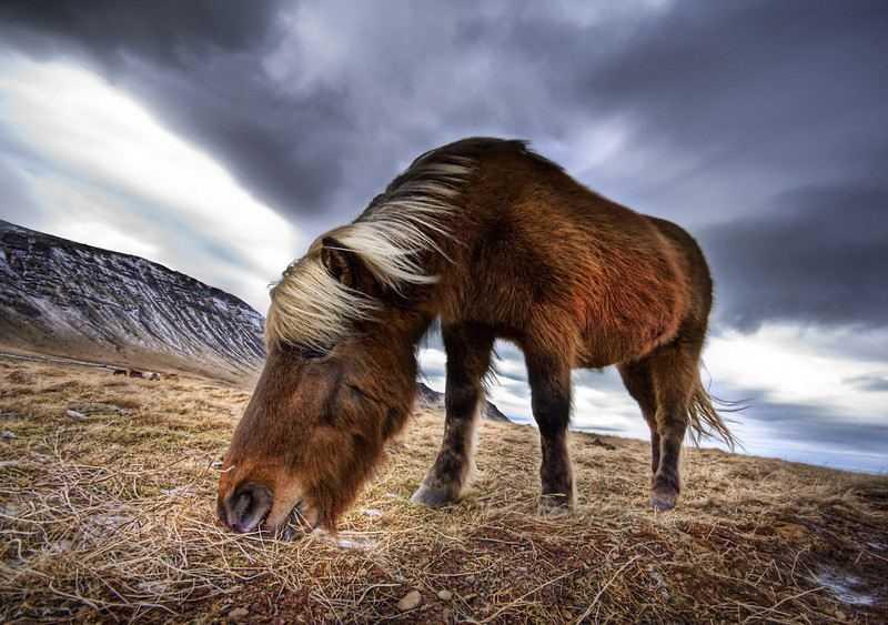 Trey Ratcliff's Horse HDR
