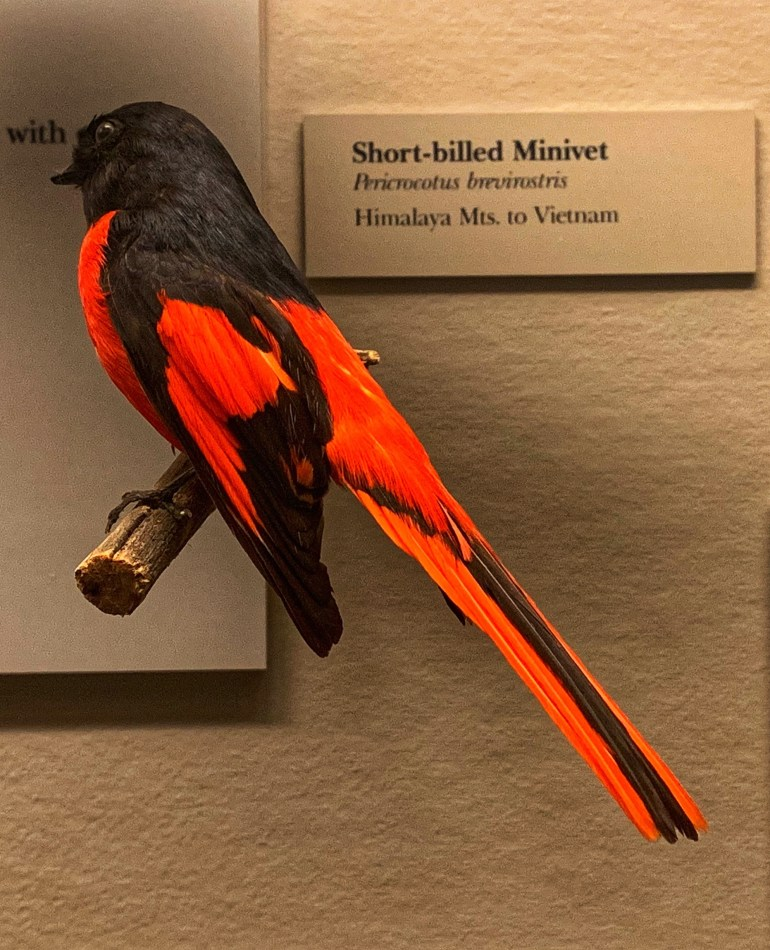 Learning All About Birds at the Field Museum in Chicago