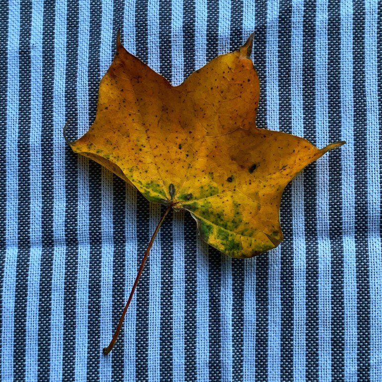 """""""She dreamed of autumn. Of chilly autumn winds and soft fall rains. She could even feel the cool moisture as the rain drops touched her face and ran down her cheeks. Her denim skirt and work boots felt heavy as the rain in her dreams splashed cold water against them"""" ― Grace Willows"""