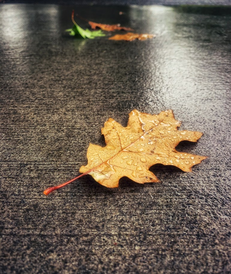"""""""The autumn leaves blew over the moonlit pavement in such a way as to make the girl who was moving there seem fixed to a sliding walk, letting the motion of the wind and the leaves carry her forward. [...] The trees overhead made a great sound of letting down their dry rain."""" ― Ray Bradbury, Fahrenheit 451"""