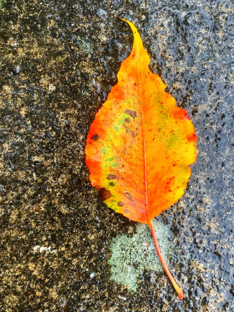 """""""And I rose In rainy autumn And walked abroad in a shower of all my days..."""" ― Dylan Thomas, Collected Poems"""