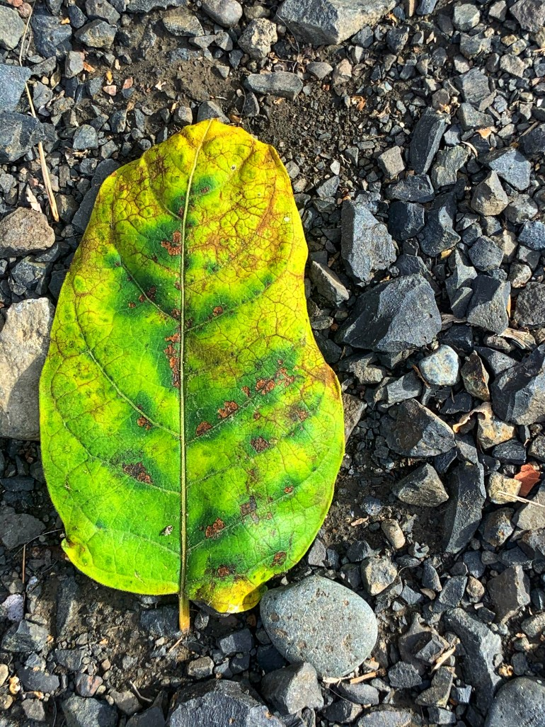 """""""Even those fallen leaves dance, on the musical wind cadence."""" ― Anoushka Tyagi"""