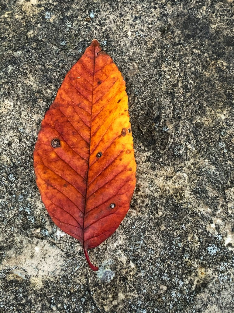 """""""I try to remember when time's measure painfully chafes, for instance when autumn  flares out at the last, boisterous and like us longing to stay - how everything lives, shifting  from one bright vision to another, forever in these momentary pastures."""" ― Mary Oliver, American Primitive"""