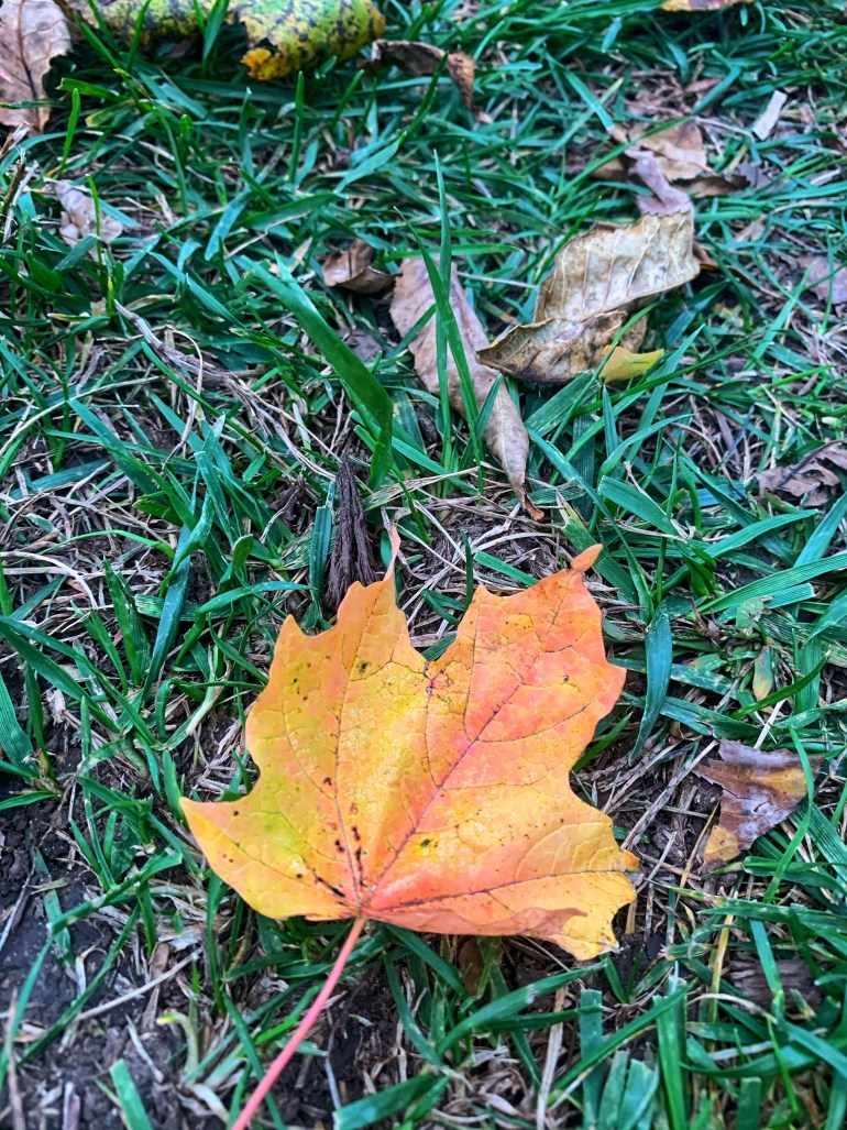 """""""A boy who loved Autumn. A girl who was forever October."""" ― Nitya Prakash"""