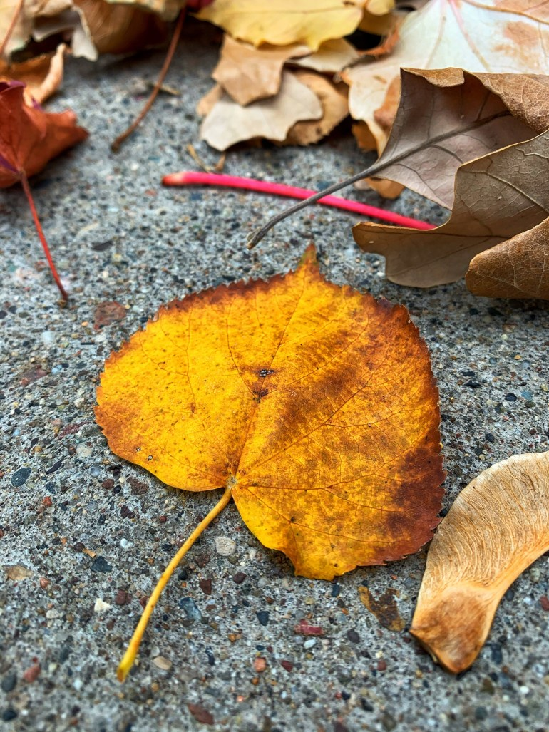 """""""It was one of those perfect English autumnal days which occur more frequently in memory than in life."""" ― P.D. James, A Taste for Death"""