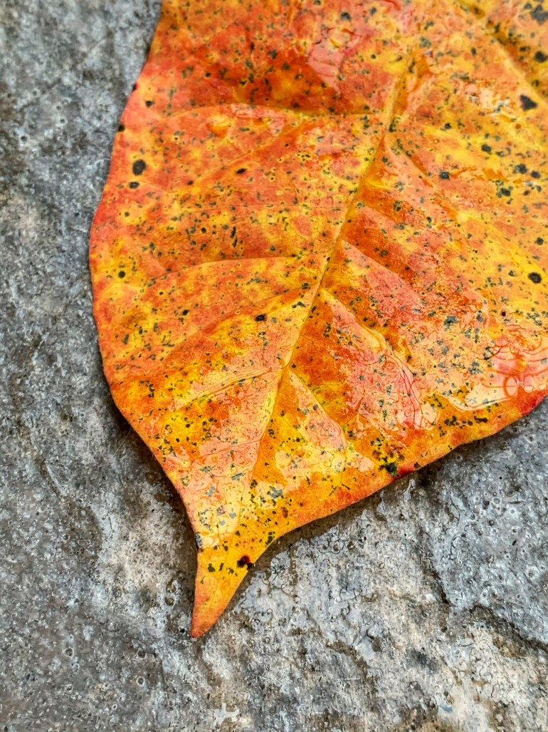 """""""Let the leaves fall where they may- Welcome October- Autumn is here"""" ― Charmaine J Forde"""
