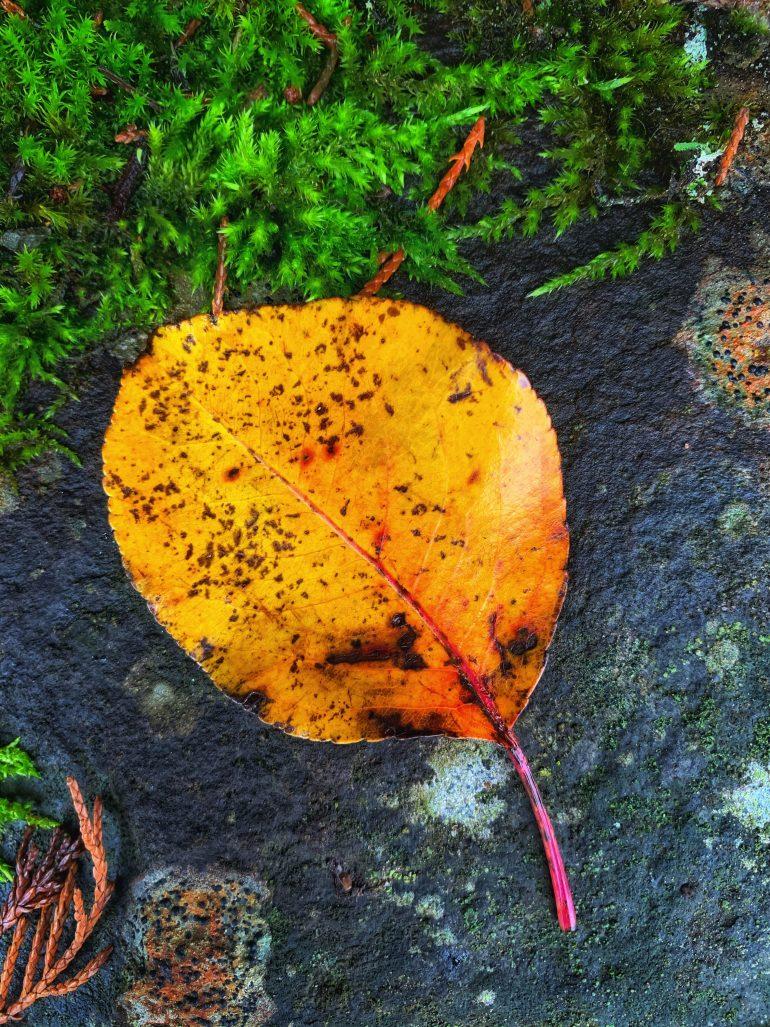 Fall Foliage in Portland, Oregon
