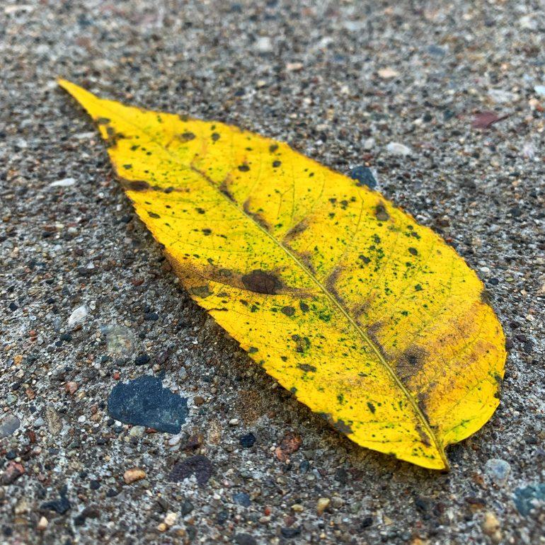 Fall Foliage at the Hoyt Arboretum in Portland, Oregon