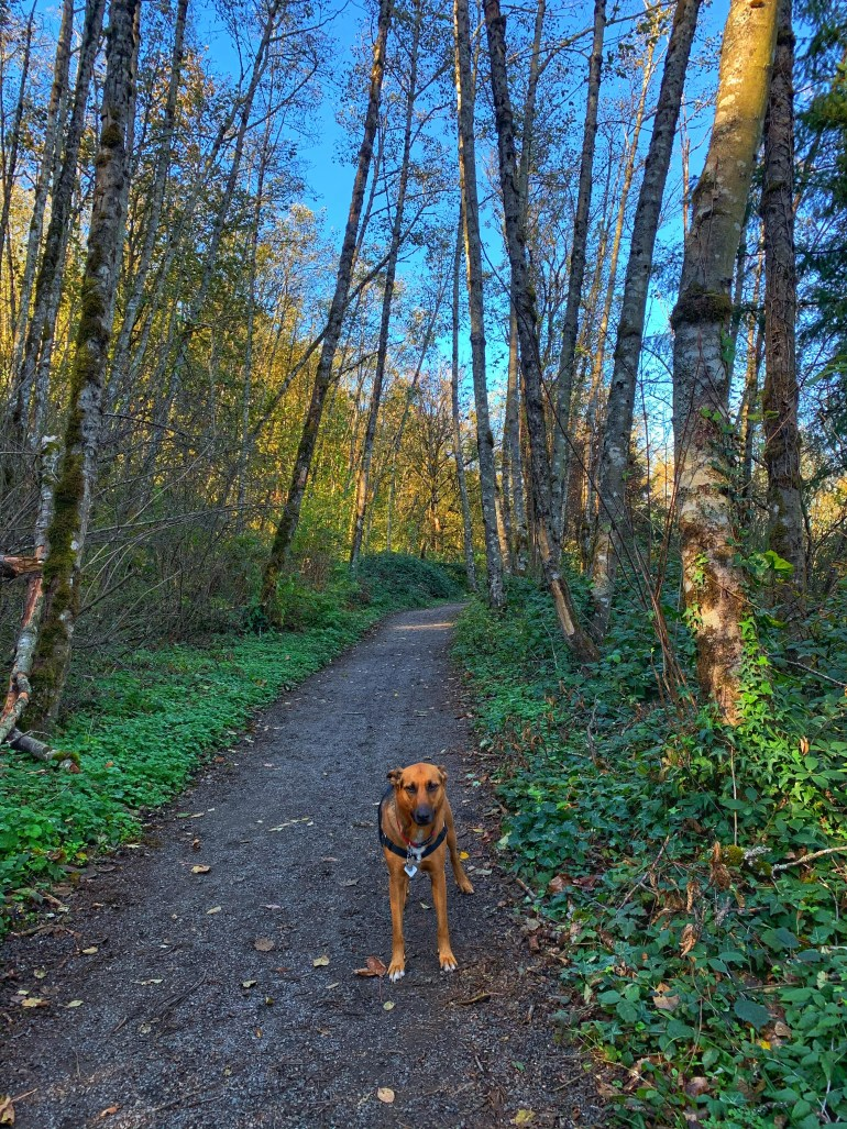 Rico the Rescue Dog from Costa Rica at Hoyt Arboretum in Portland, Oregon