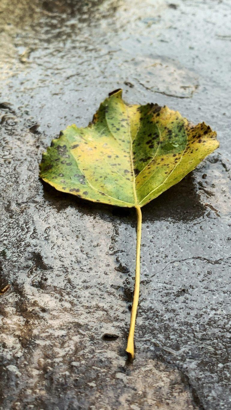 The Final Days of Fall in Camas, Washington
