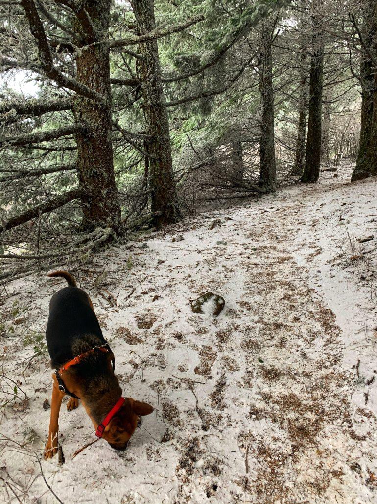 Hiking Up Dog Mountain in Washington State, December 2020