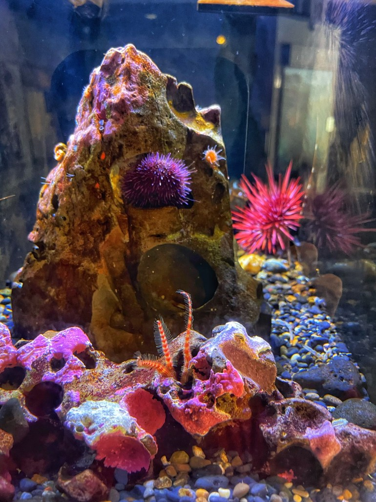 Underwater Photography at the Oregon Coast Aquarium in Newport, Oregon