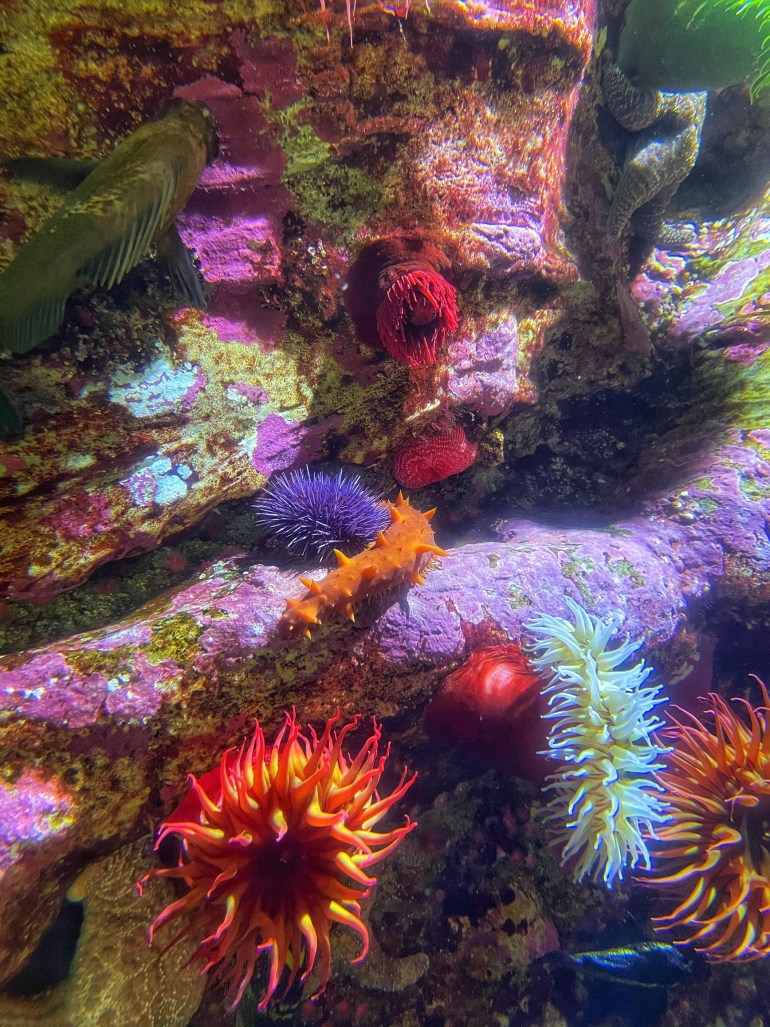 Underwater Photography at the Oregon Coast Aquarium in Newport, Oregon