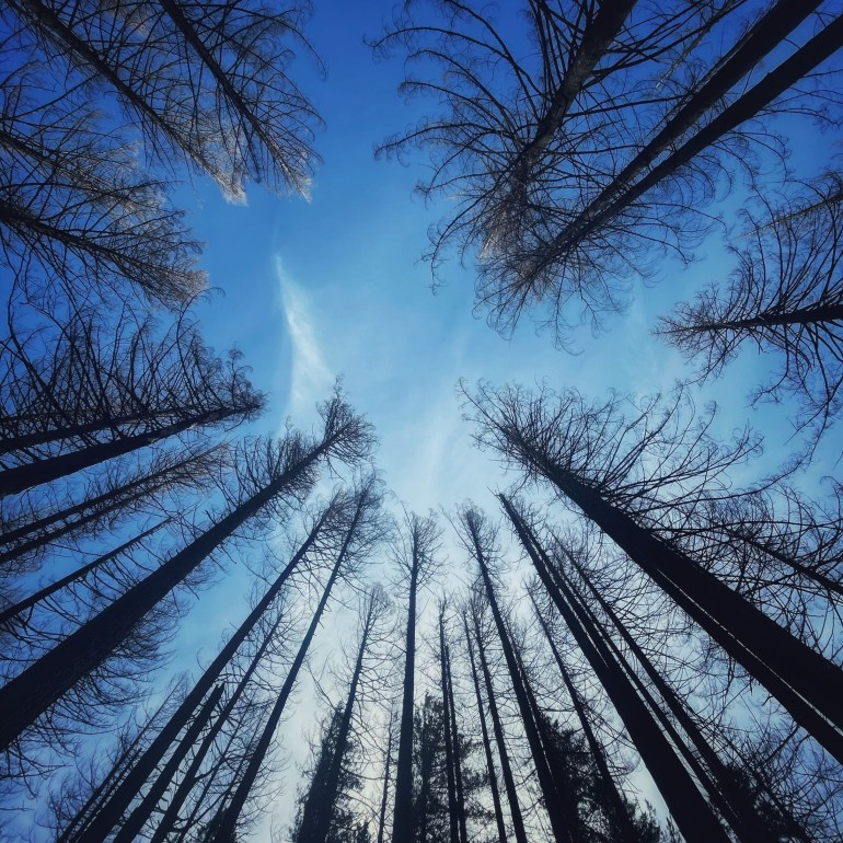 Look Up: Healing Trees in the Columbia Gorge, Oregon