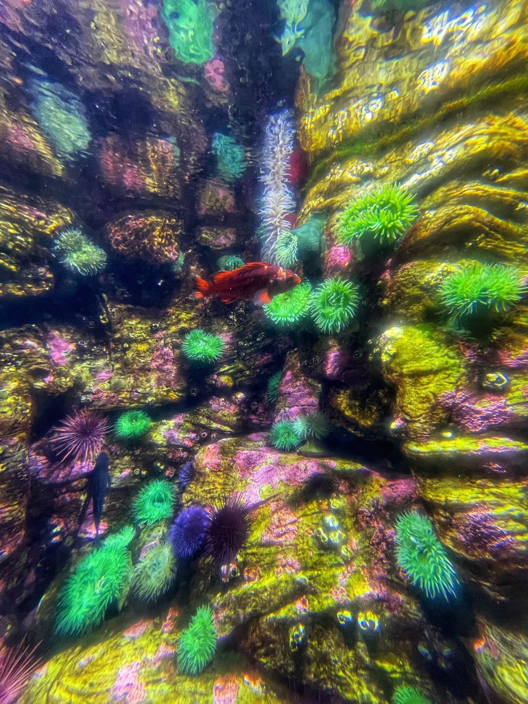 Photo taken at the Oregon Coast Aquarium in Newport, Oregon