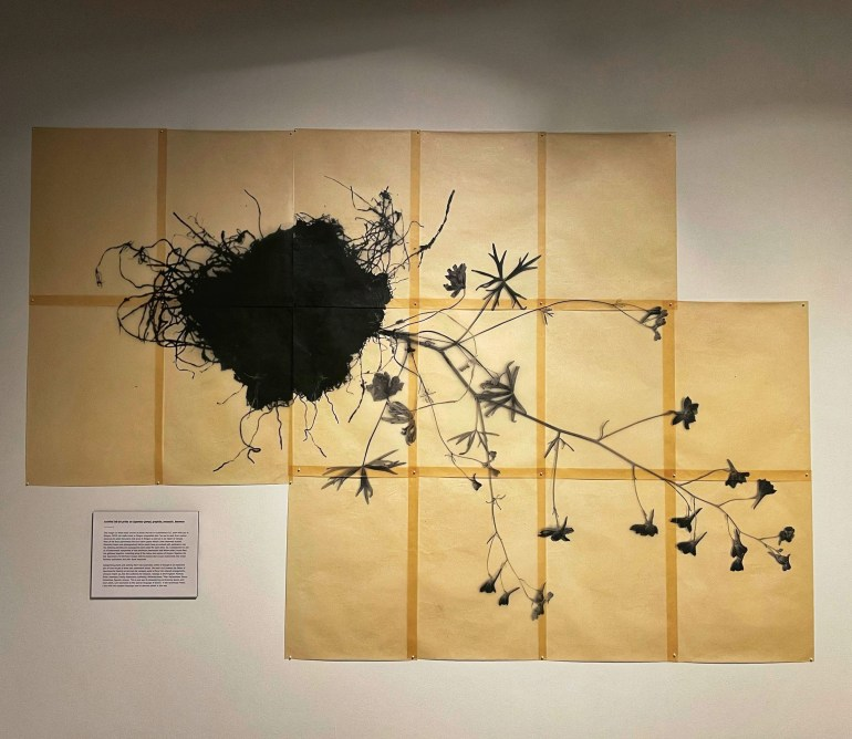 In Time's Hum: The Art and Science of Pollination at the High Desert Museum in Bend, Oregon