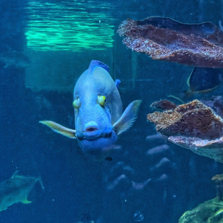 In Motion: At the Point Defiance Aquarium in Tacoma, WA