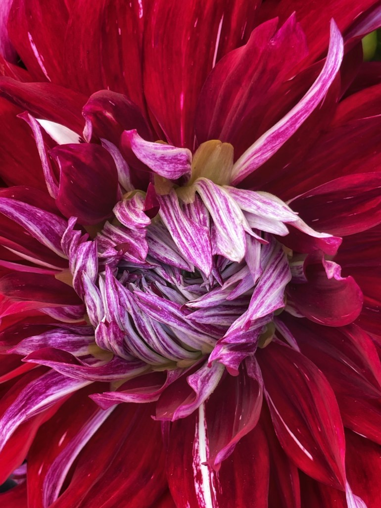 Flower of the Day for August 29, 2021