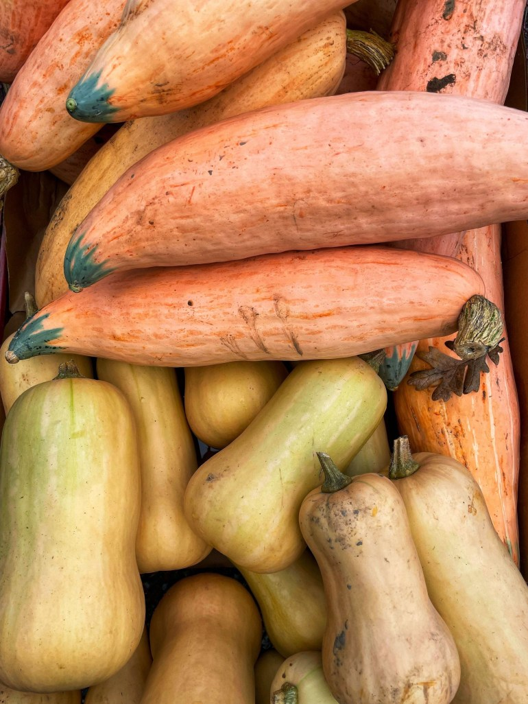 Flower of the Day for October 6, 2021: Squash