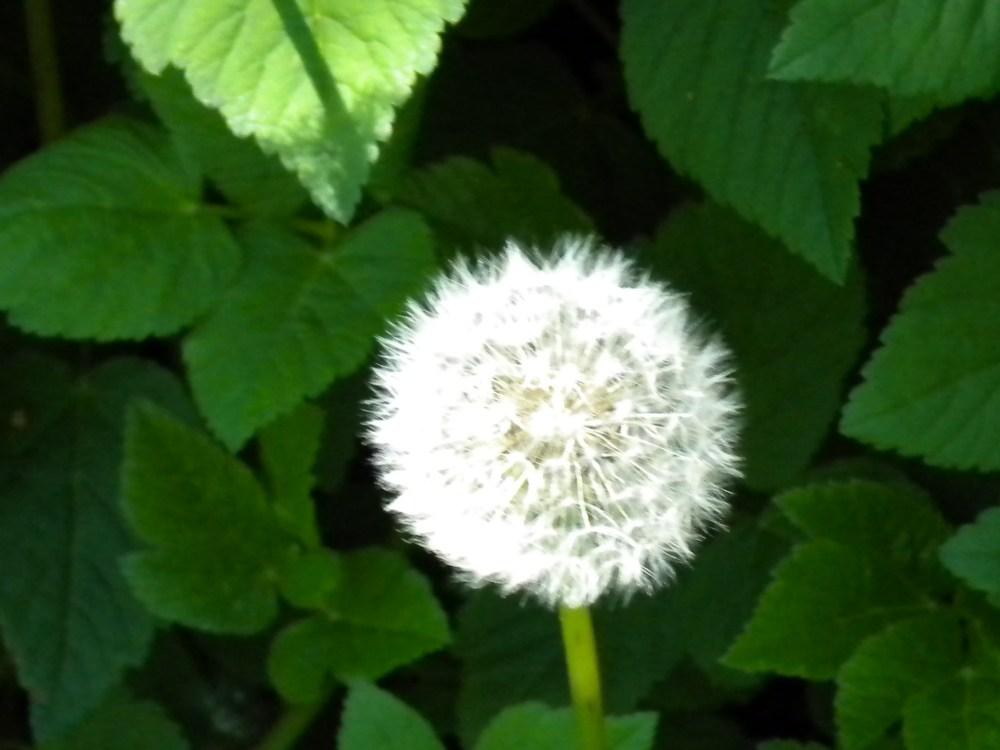 Make A Wish (4/5)