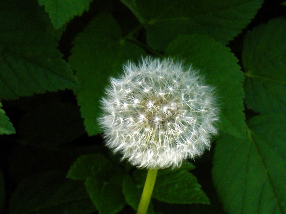 Make A Wish (5/5)