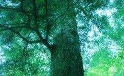 木の話。催眠で見た過去生をシータヒーリングで。