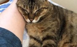動物好きが動物と接したときに増加する、愛情ホルモン