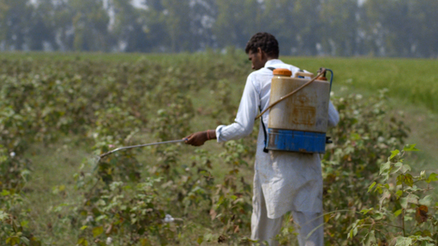india-cotton-farm