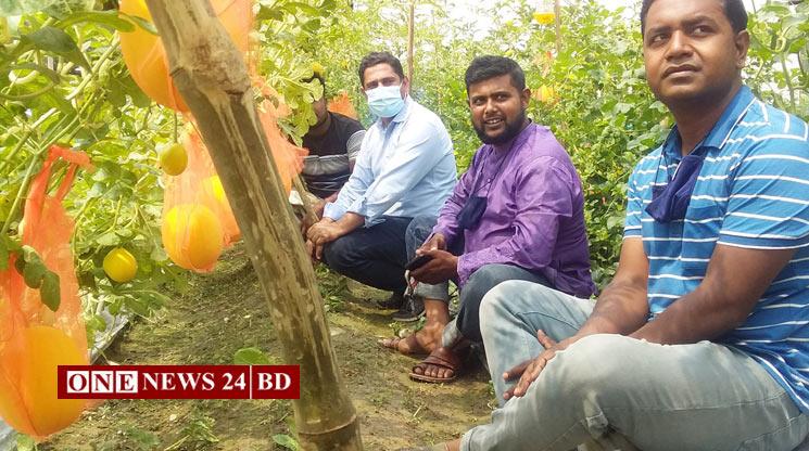 নতুন জাতের ফল হলুদ তরমুজ চাষ হচ্ছে কিশোরগঞ্জের পাকুন্দিয়াতে