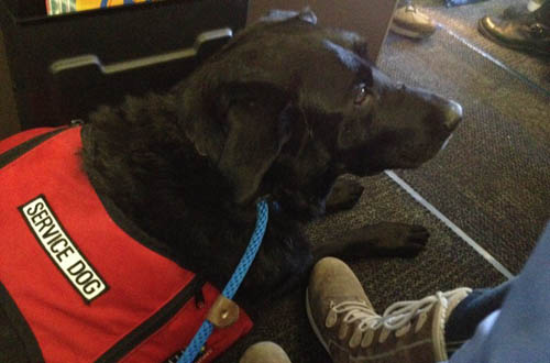travel emotional support service dog, service dog, travel, how to, need, documents, fly, dog, ID, letter, doctor