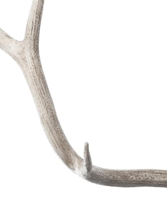 Lazy Susan Weathered Elk Antler Detail