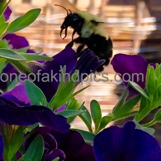 one of a kind photos Flower and Bee