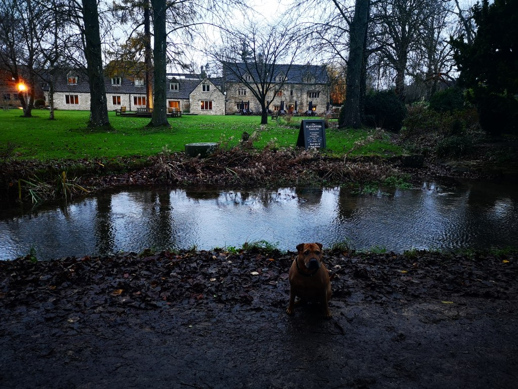 The Slaughters Inn (Lower Slaughter, the Cotswolds) is dog-friendly